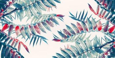 Sticker Schöne tropische Blätter Hintergrund, Banner