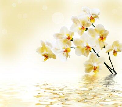 Sticker Schöne weiße Orchidee