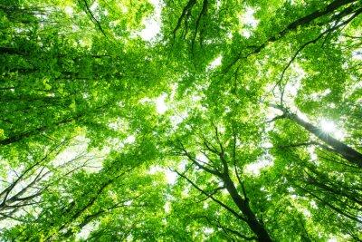 Sticker Schönen grünen Wald