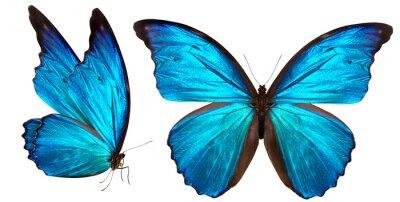 Sticker schönen Schmetterling isoliert auf weiß