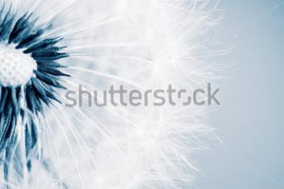 Sticker Schöner Löwenzahn mit Samen, Nahaufnahme