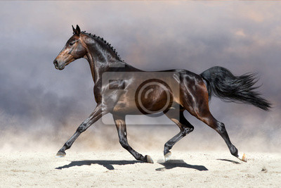 Schönes Pferd traben auf sandigem Feld
