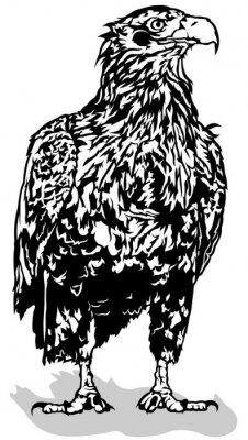 Sticker Schwarz-Weiß-Adler - Umrissene Illustration, Vektor