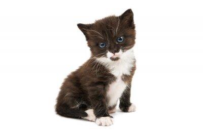 Sticker Schwarz-Weiß-Kätzchen isoliert