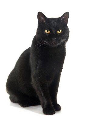 Sticker schwarze Katze