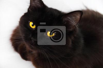 Schwarze Katze freuen, Sie mit leuchtend gelben Augen