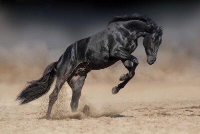 Schwarze Pferd Hengst spielen und springen in Wüste Staub gegen dramatischen dunklen Hintergrund