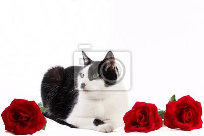Schwarze und weiße Katze mit roten Rosen