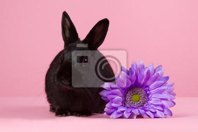 Schwarzer Zwerg-Kaninchen mit lila Blume