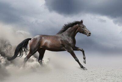 Schwarzes Pferd laufen Galopp in Staubwüste