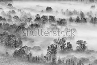 Sticker Schwarzweiss-Landschaft, der nebelige Wald, Italien