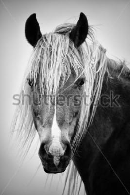 Sticker Schwarzweiss-Pferdeportrait
