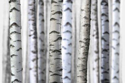 Sticker seamless birch trees