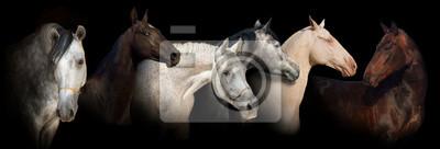 Sechs Pferd Porträt auf schwarzem Hintergrund