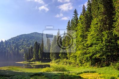 See in den Bergen von einem Pinienwald umgeben