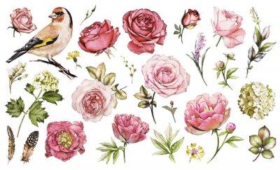 Sticker Set Aquarell Elemente der Blüte Rose, Pfingstrosen, Hortensie, Sammlung Garten und wilde Blumen, Blätter, Zweige, Illustration isoliert auf weißem Hintergrund, Vogel - Stieglitz, rosa Knospe
