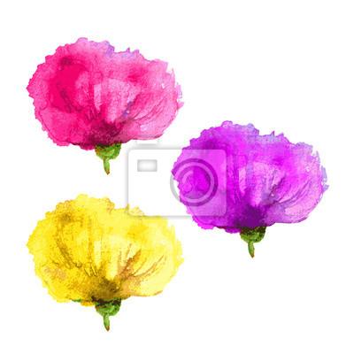 Sticker Set Mohnblume - gelb, rosa, lila. Aquarell-Illustration isoliert  auf weißem 78176ab846