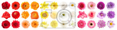 Sticker Set of different beautiful flowers on white background. Banner design