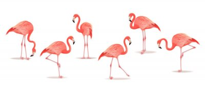 Sticker Set of exotic flamingos isolated on white background. Hand drawn watercolor illustration.