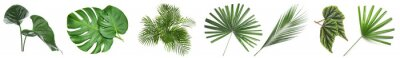 Sticker Set of green tropical leaves on white background