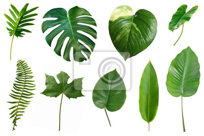 Sticker Set of tropical green leaves isolated on white background.