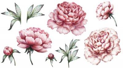 Sticker Set vintage Aquarell-Elemente der rosa Pfingstrosen, Sammlung Garten Blumen, Blätter, Illustration isoliert auf weißem Hintergrund. Knospe und Blatt, Pfingstrose