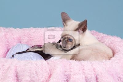 Siam Kätzchen spielt in rosa Korb