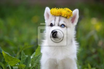 Husky Retro Kühlschrank : Siberian husky welpen fototapete u fototapeten sibirischer husky
