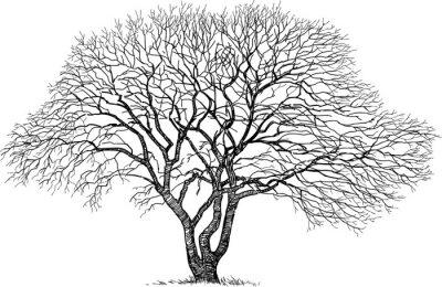 Sticker Silhouette des alten Baumes