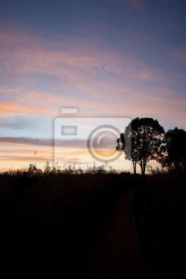 Silhouette Feld