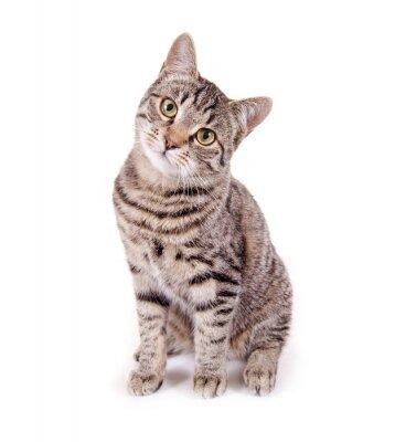 Sticker Sitzende, getigerte Katze