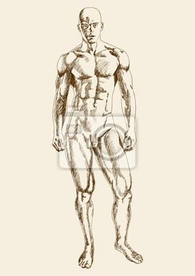 Sketch Illustration eines muskulösen männlichen Figur