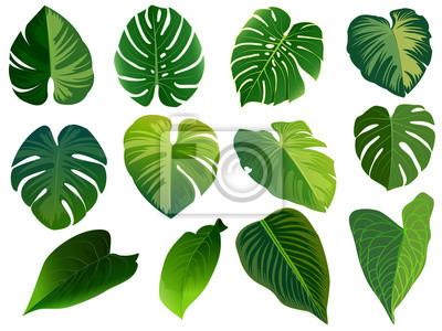 Sticker Sommer, Frühlingsblätter eingestellt. Grüne flache Ikone. Vektor, isoliert auf weiss