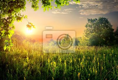 Sommer schönen Sonnenuntergang