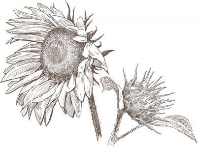 Sticker Sonnenblume