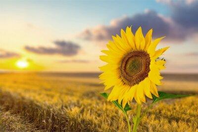 Sticker Sonnenblume.