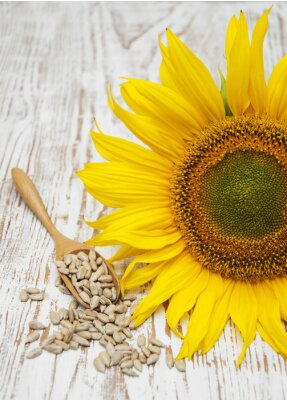 Sticker Sonnenblume mit Samen