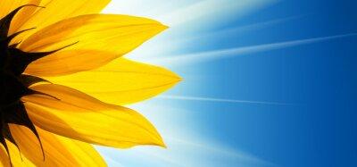 Sticker Sonnenblume Sonnenschein am blauen Himmel Hintergrund