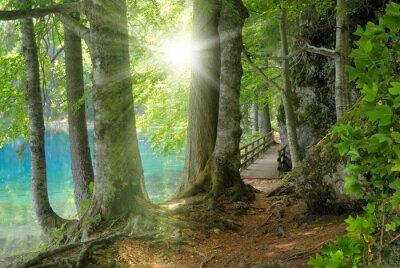 Sticker Sonnenschein im Wald NEBEN klarem anzeigen
