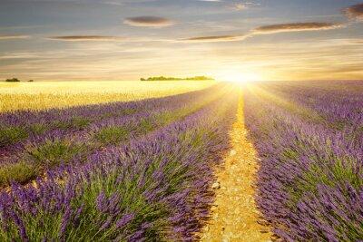 Sticker Sonnenuntergang auf Lavendel- und Weizenfeldern