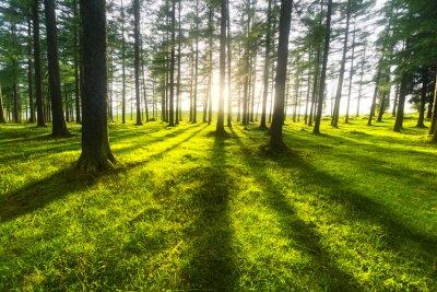 Sticker sonnigen Wald
