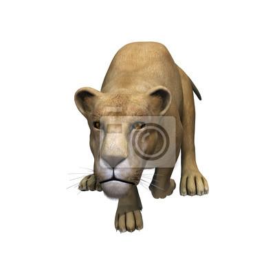 Springen Löwin