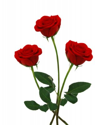 Stack red rose flowers isolated on white background