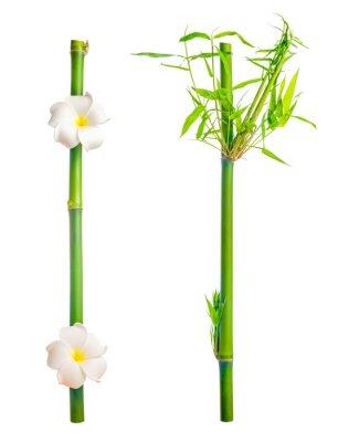 Sticker stammt aus Bambus mit Blättern und Frangipani Blüte isoliert auf