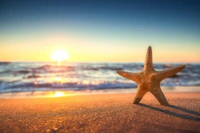 Sticker Starfish am Strand bei Sonnenaufgang