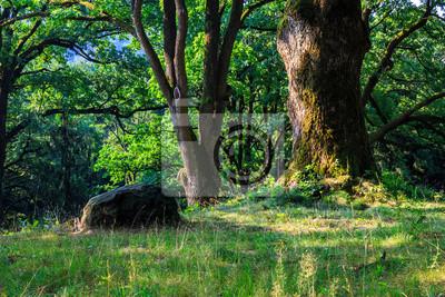 Stein in der Nähe eines Baumes im Wald. horizontal