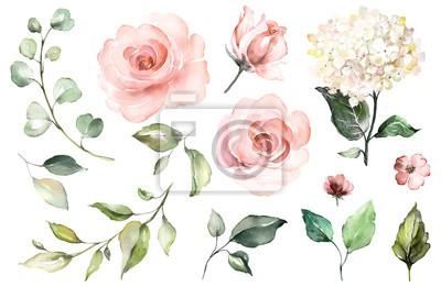 Stellen Sie Aquarellelemente von Rosen, Hortensie ein Sammlungsgartenrosablumen, Blätter, die Niederlassungen, die botanische Illustration, die auf weißem Hintergrund lokalisiert wird. Knospe von Blum
