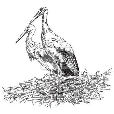 Storks Paar in der Nest Vektor Illustratoin