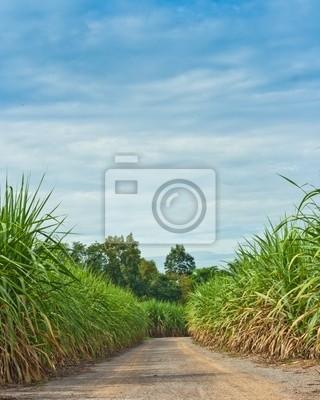 Straße in der Zuckerrohr-Feld