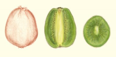 Sticker Studi di Frutta: kiwi